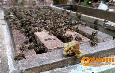 Đánh giá về mật ong của Mật ong Yên Dưỡng