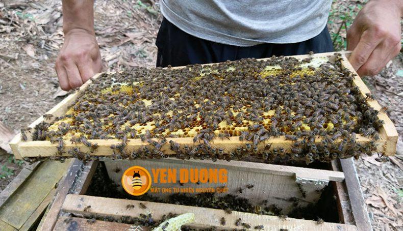 Cầu ong của Mật Ong Yên Dưỡng