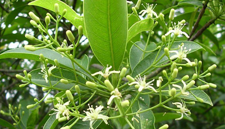 Hoa cây bí bái