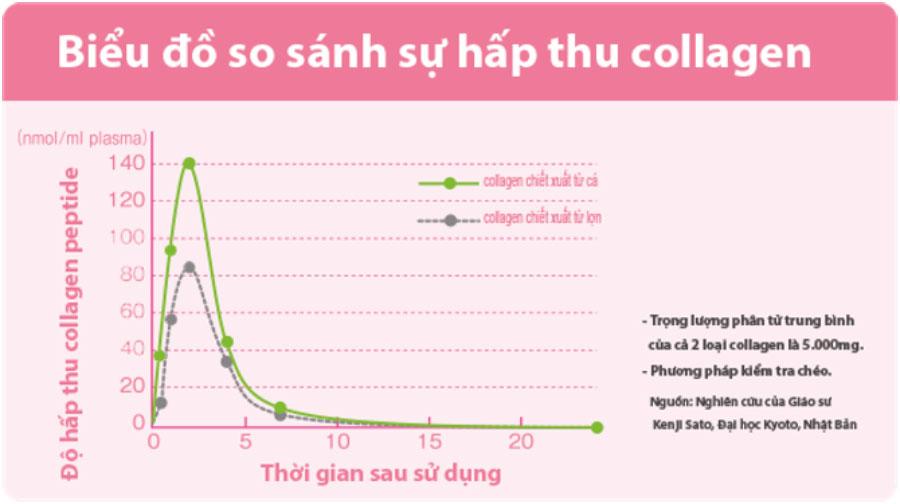 Fish Collagen giúp làn da được hấp thụ nhiều collagen hơn