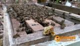 Mật Ong: Đánh giá về mật ong của Yên Dưỡng!